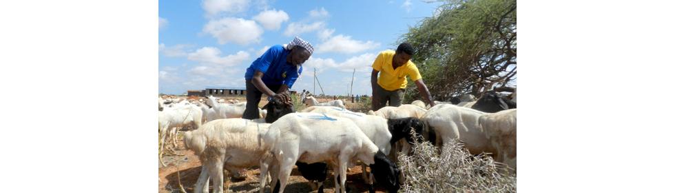 Ethiopia_2_Livelihoods